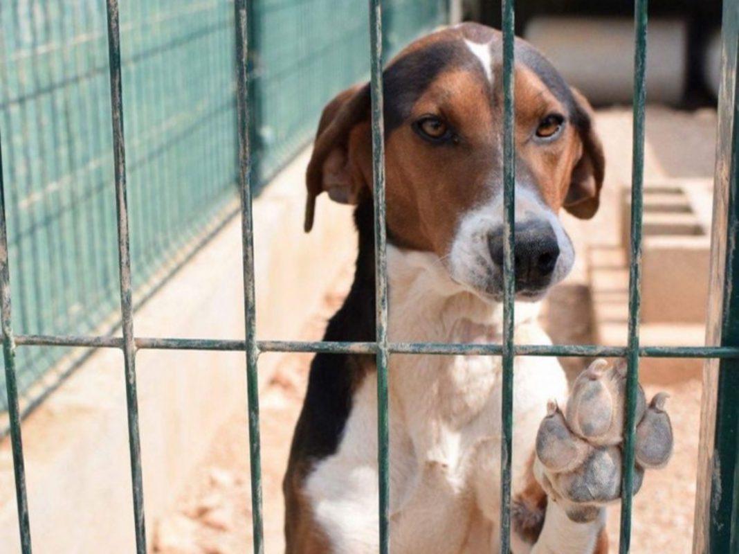 Hund in kroatischer Auffangstation. Foto: Fellkinder in Not e.V./Anita Hotzelt
