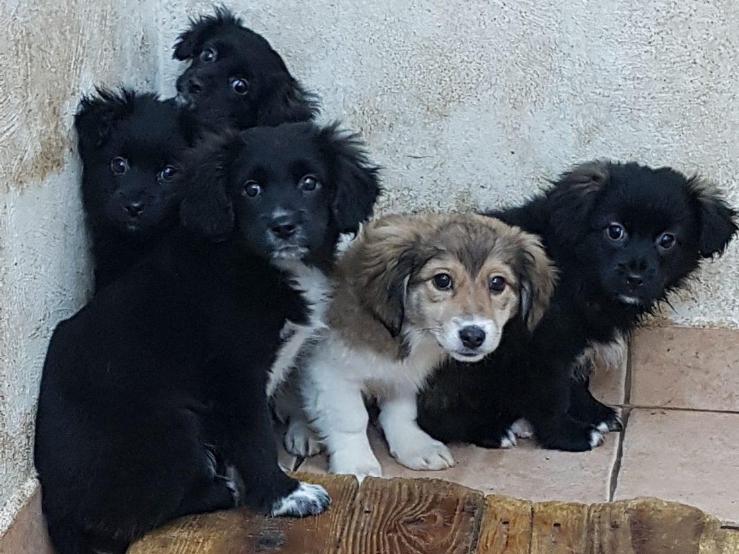 Hundewelpen in einer Tötungsstation. Foto: Fellkinder in Not e.V./Anita Hotzelt